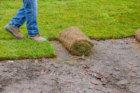Gardener installing natural grass turf professional installer beautiful rolled sod lawn field. Stockfoto