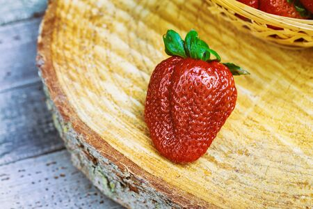 Close Up ripe red juicy strawberries fruits growing in farm garden