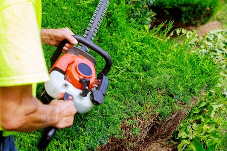Pruning trees with gardener in pruning trees with trimmer Foto de archivo