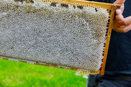 Beekeeper stands near the hives holding honeycomb in hive farm close up