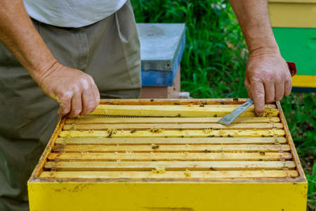 Apiculture beekeeping beekeeper works with bees near hives taking out frames with honeycombs for inspection