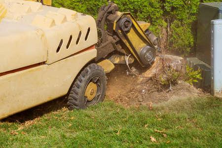 Man cuts a fallen stump grinder machine removing in action in dangerous work.