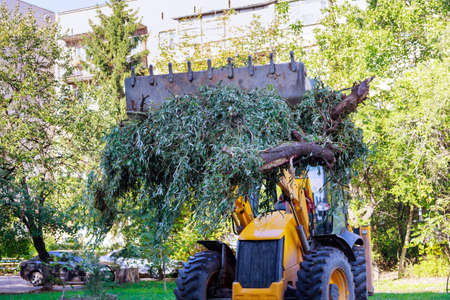 Utility workers removal branches and trunks trees with residential buildings service in a residential neighborhood