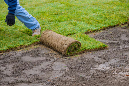 Applying rolled green grass with laying sod for new lawn applying turf rolls