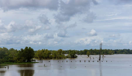 Flooded area of field and forest due to flood field landscape