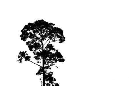 silueta de un árbol Foto de archivo - 9806245