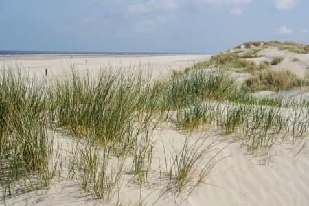 journeying: Landscape of dunes at the coast of the Netherlands