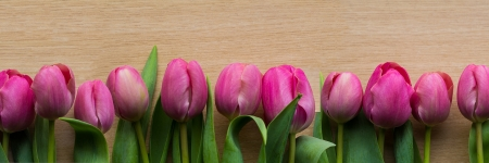 Pink tulips banner Stock Photo - 20384754