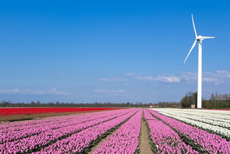 Tulips with a wind turbine in the background photo