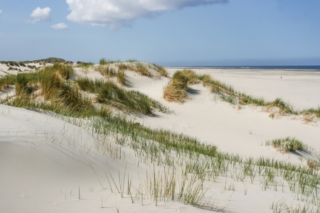Sand dunes at the coast of the Netherlands photo