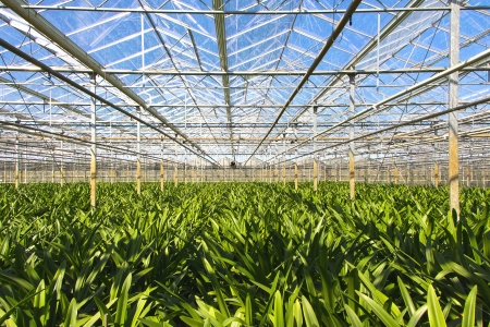 Horticulture  greenhouse with flowers Foto de archivo