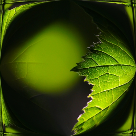 artisitc: Artisitc green background with a leave