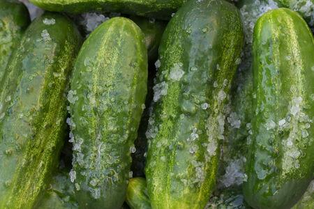 conserving: Fresh pickle in salt for conserving