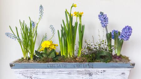 purple  love: Springflower arrangement