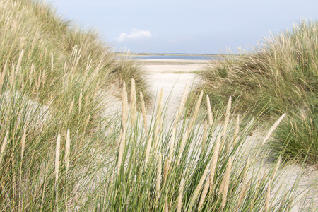 Sandy dunes at the Wadden islands in the Netherlands