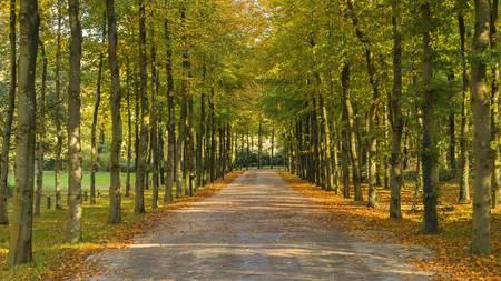 autmn: Autmn lane in the forest Stock Photo