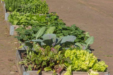 greening: Urban greening