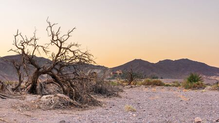 Death tree in Detah valley during sunset