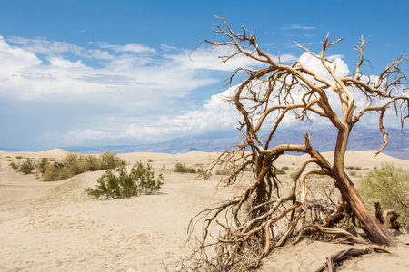 Death trees in Death Valley National Park