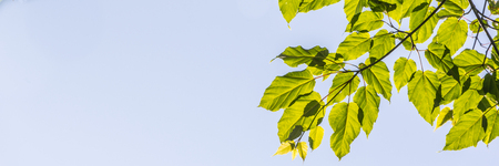 blue green background: Green leaves background with a blue sky Stock Photo