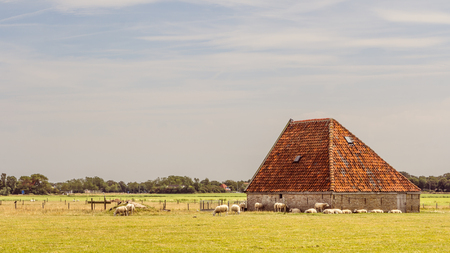 texel: Sheep barn on the waden sialnd Texel in the Netherlands Stock Photo