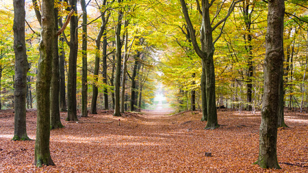veluwe: Walking in autumn colors in the forest of the National Park Hoge Veluwe in the Netherlands Stock Photo