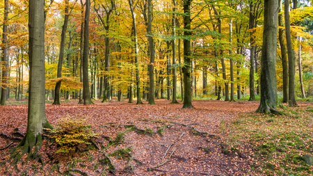 veluwe: Autumn colors in the forest of the National Park Hoge Veluwe in the Netherlands
