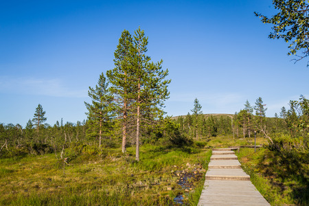 national parks: Boardwalk in Urho Kekkonen National Park in Finland. It is one of the major national parks in Lapland, Finland Stock Photo