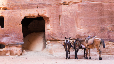 Two brown donkey waiting for tourist in Petra Jordan Stock Photo