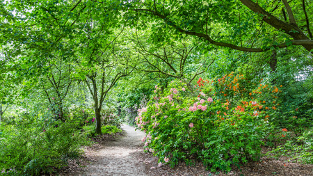 belmonte: Rhododendron Flowers in public park