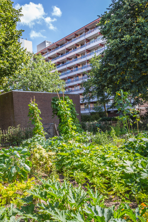 guerrilla: Urban agriculture: a vegetable garden beside an apartment building in a suburbsof a city
