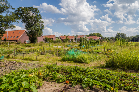 Urban agriculture: a vegetable garden beside modern houses in the subsurbs of a city
