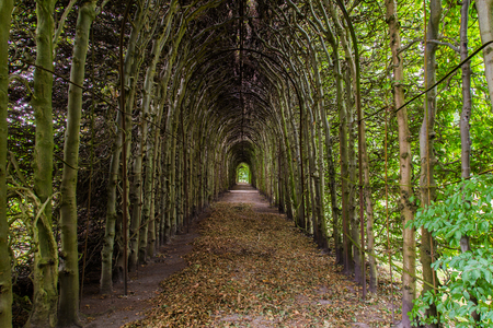 french way: Romantic archway of beech trees
