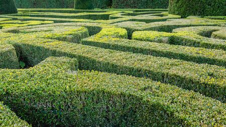 Natural hedge maze or labyrinth in a formal garden castle