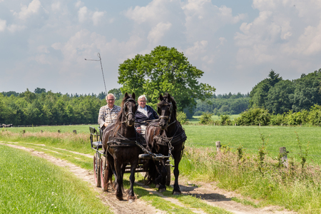 agricultural area: MARKELO, NETHERLANDS - JUNE 3, 2016:Two black Frisian horse and two older man in a traditional Dutch carriage in agricultural area. Editorial