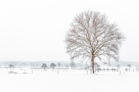covered fields: Dutch snow landscape with trees