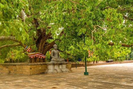 Buddha statue under the bodhi tree at the Jetavanarama Dagoba, the biggest stupa in Anuradhapura, Sri Lanka. Stock Photo