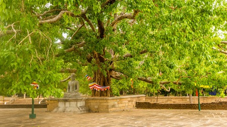 Jetavanarama Dagoba, Anuradhapura, 스리랑카에서에서 가장 큰 stupa에 bodhi 나무 아래 부처님 동상.