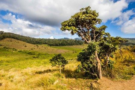 Landscape Horton Plains National Park in Sri Lanka