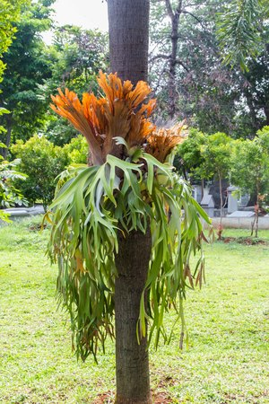 Staghorn Fern on a tree Stok Fotoğraf