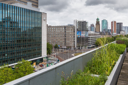 Vegetable roofgarden on top of an office building in the citycenter of Rotterdam, Netherlands. The biggest rooftop farm in Europe.