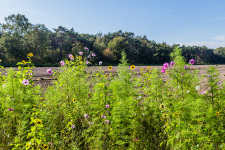 Wild flowers along an agricultural field to increase biodiversity as part of biological farming Stockfoto - 115482194
