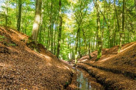 Lttle stream in a Dutch forest in National Park Posbank and  Veluwe in Gelderland, Netherlands Stockfoto - 115482206