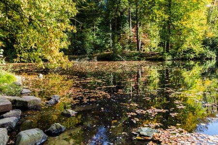 Lttle stream in a Dutch forest in National Park Posbank and  Veluwe in Gelderland, Netherlands Stockfoto - 115482024