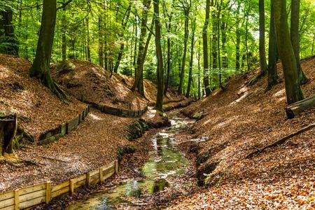 Lttle stream in a Dutch forest in National Park Posbank and  Veluwe in Gelderland, Netherlands Stockfoto - 115482027