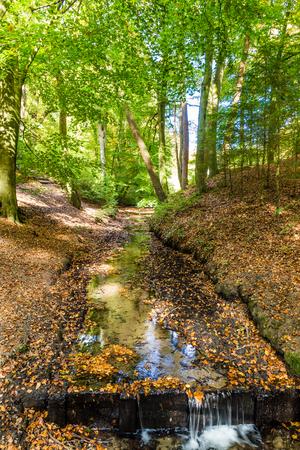 Lttle stream in a Dutch forest in National Park Posbank and  Veluwe in Gelderland, Netherlands Stockfoto - 115482031