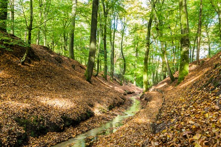 Lttle stream in a Dutch forest in National Park Posbank and  Veluwe in Gelderland, Netherlands Stockfoto - 115482033