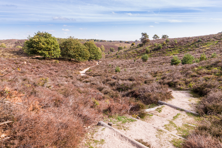 Lifeless heather in National park the Posbank and Veluwe in the Netherlands after the very hot and dry  summer of 2018 Stockfoto - 115482034