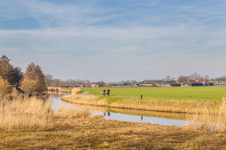 Typical Dutch landscape with grassland, farm, canal and cyclist