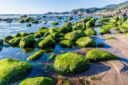 Colorful stones covered with algea at the coast of Sardinia island in  Italy Stockfoto
